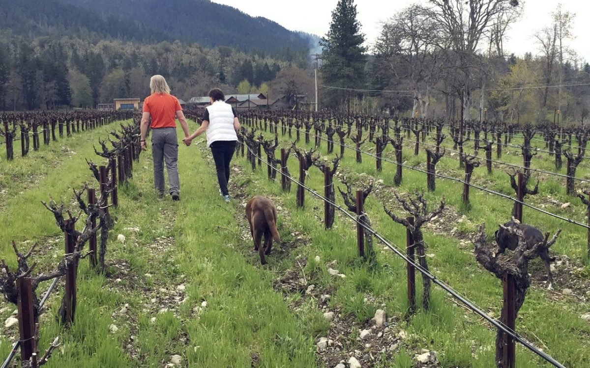 Oregon Vineyard Gives Marijuana Farming A Try.