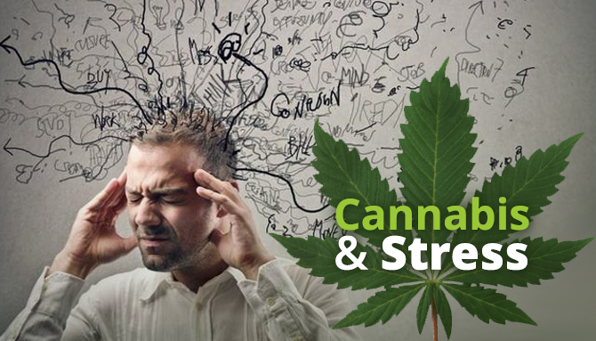 Cannabis For Stress & Anxiety